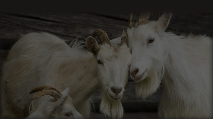 Young Pastors: The Church's Scapegoats??